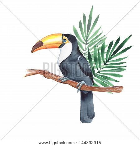 Toucan on branch. Watercolor illustration 3. Isolated on white background