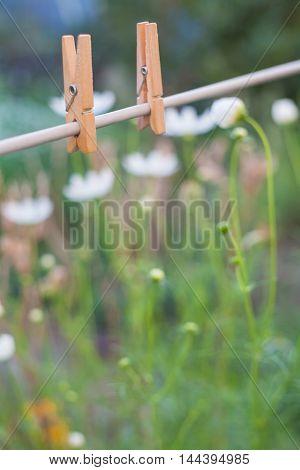 clothes peg in garden on flower background