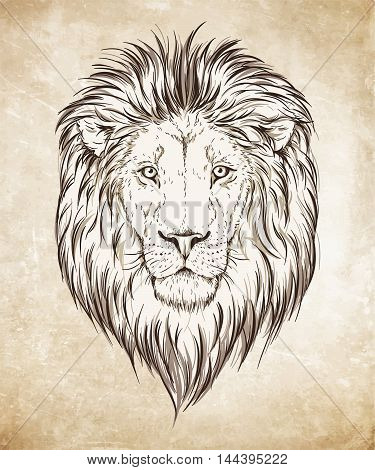 Lion Head Hand Drawn Graphic Over Grunge Paper Background Vector