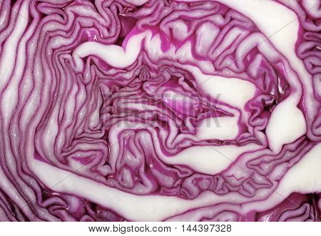 Cross Section Of Red Cabbage Background