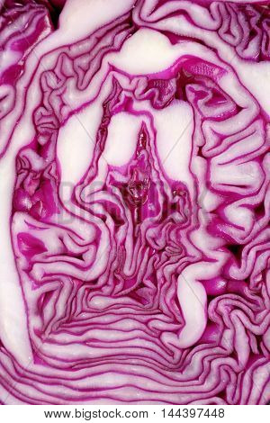 Cut Face Of Red Cabbage Background