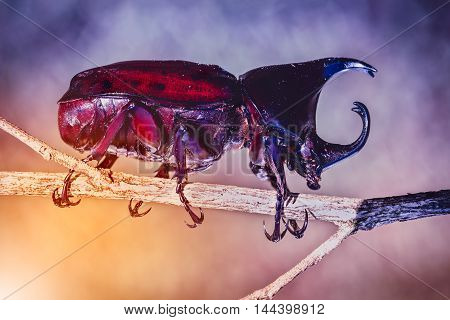 Scarab beetle in forest. Closeup realistic colorful tropical beetle perched on a branch fantastic background at nighttime.