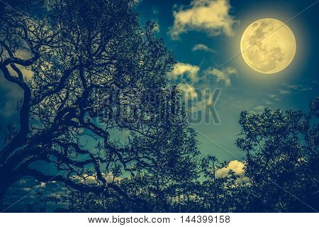 Silhouette Of The Branches Of Trees Against The Night Sky With Full Moon. Outdoors.