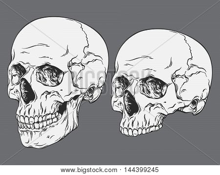 Hand Drawn Line Art Anatomically Correct Human Skulls Set Isolated Vector