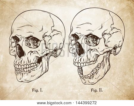 Vector Hand Drawn Line Art Anatomically Correct Human Skulls Set