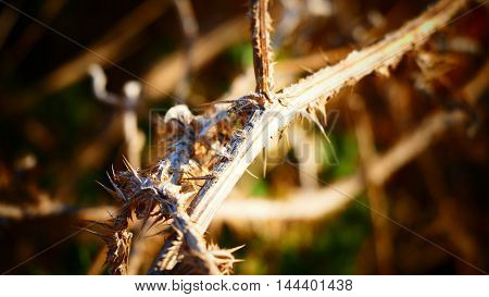 Big Thorny branches - with blur background