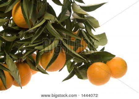 Oranges In Cluster