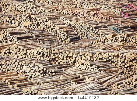The view of logs in Wellington city (New Zealand).