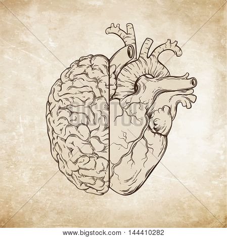 Hand Drawn Line Art Human Brain And Heart. Da Vinci Sketches Style Over Grunge Aged Paper Background
