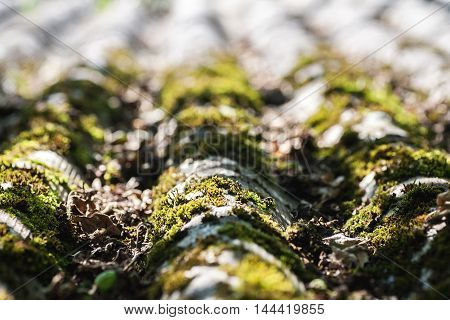 Old Slate Roof With Moss On It