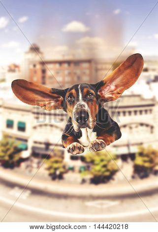 a basset hound with giant flapping ears flying over a city like a super hero dog toned with a vintage retro instagram filter effect app or action