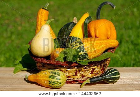 Ornamental pumpkins as a decoration in basket