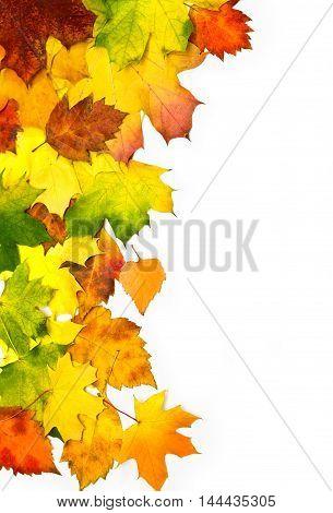 L Autumn Leaves