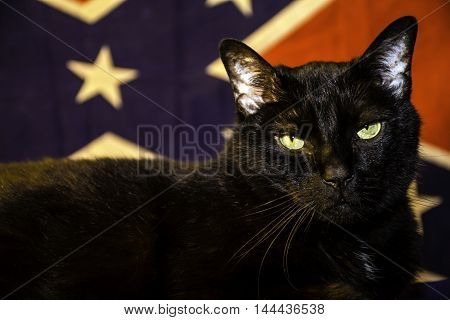 large black cat in front of confederate flag