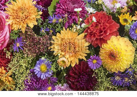 Bunch of flowers in several Colors of fall