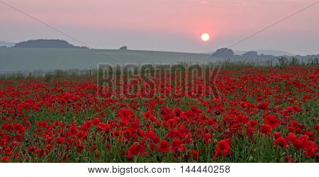 A field of poppies at Sunset. A commemoration of the thousands who died during the First World War.