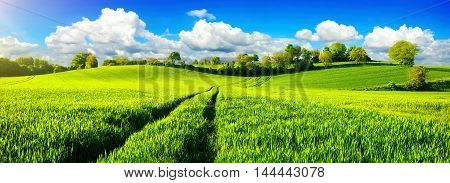 Panoramic landscape with idyllic vast green fields on hills vibrant blue sky and fluffy white clouds