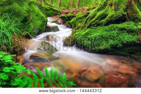 Closeup of a small forest brook the clear water gently flowing through moss covered forest ground