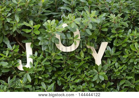 Joy spelled out in wooden letters hanging on branches of a green bush.