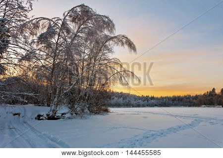 Winter sunset near the forest