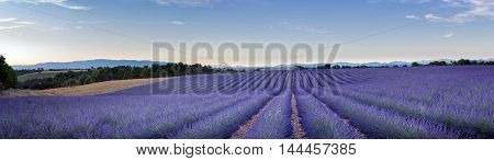 Panoramic view of Lavender field in Provence near Valensole France