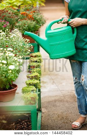 Young beautiful female florist watering flowers. Blury outdoor background.