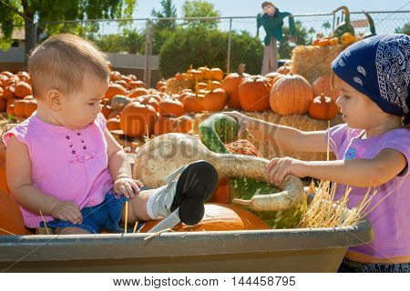 Sisters in a pumpkin patch inspect gourds. Both are young and the toddler is sitting in a wheelbarrow amongst the produce. She is wearing special shoes for her clubfoot.