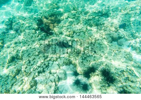 underwater view of fish and sea urchin and coral from snorkeling driving