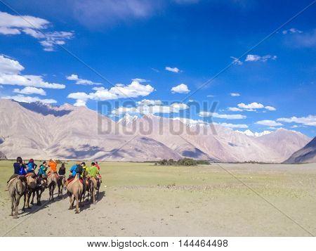 LEH LADAKH INDIA - July 9 2014 : Unidentified tourist ride carmels at Hunder village in Nubra Valley Ladakh Jammu and Kashmir India.