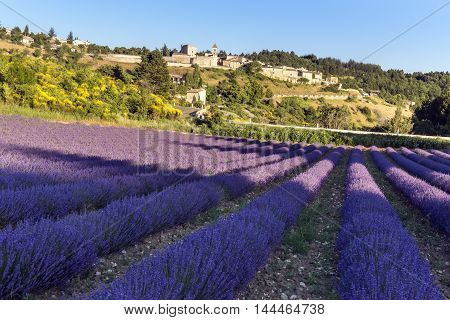 Little village in south of France with a lavender field in front of it