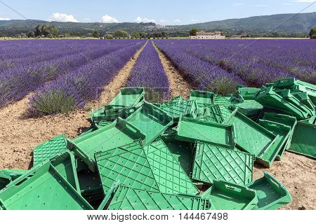 Lavender field and green boxes, Provence, France