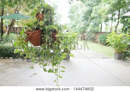 Hanging plant pots decorated in garden stock photo