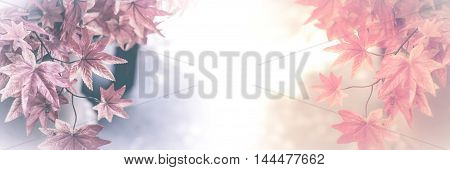 Autumn maple leaves background. Maple leaf concept for background.(vintage effect and soft focus)