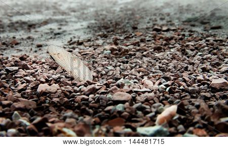 Dry dragonfly wing in the dry sea pebbles. Background of sadness and loneliness