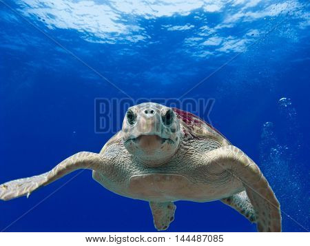 the image appears a turtle with a shell impeccable and a girl who can see details