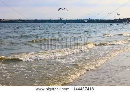 Seagulls flying over the sea in Ukraine
