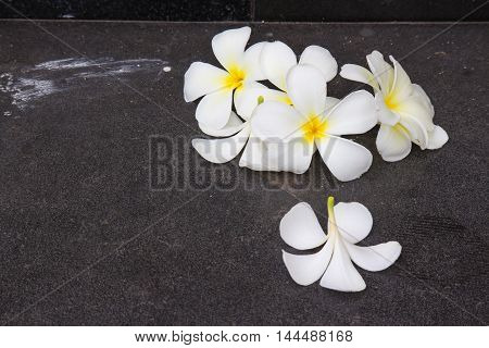 White Plumeria flower drop on the black staircase