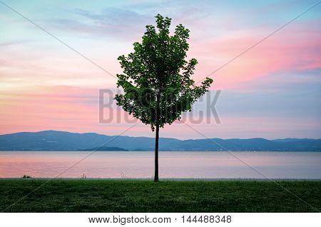 Lake Trasimeno (Umbria Italy) and lonely tree