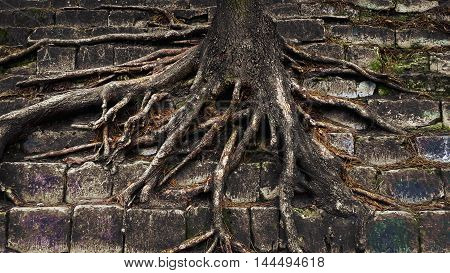 Photo of tree's roots in the park