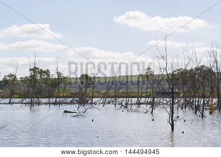 Dead trees in the midst of the Murray River at Young Husband, South Australia with a houseboat peeking through the branches.