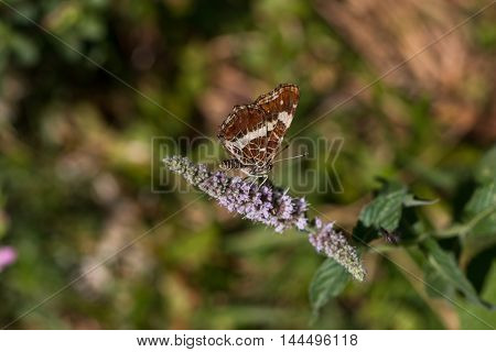 Butterfly Perched On  Green Plant