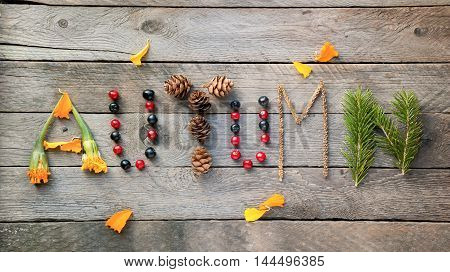 Autumn from berries, herbs and petals. Creative text on wooden background