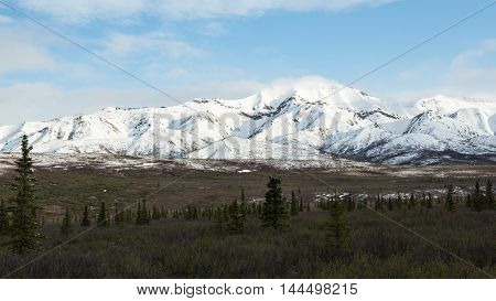 The fields and mountains of Alaska's Denali National Park