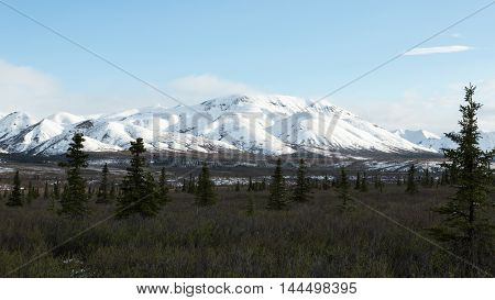 The fields and snowcapped mountains of Alaska's Denali National Park