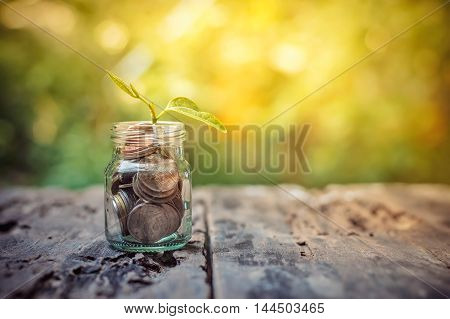 Plant growing in saving coins on wooden background