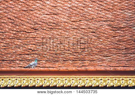 A pigeon stay on beautiful temple roof tile