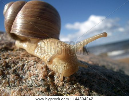 Snail on the beach animal sea stone summer sky house sun sunburn horns