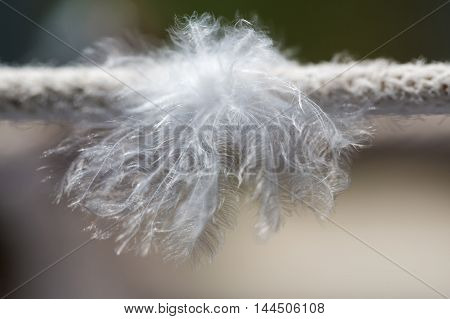 abstract background bird feathers on the rope closeup
