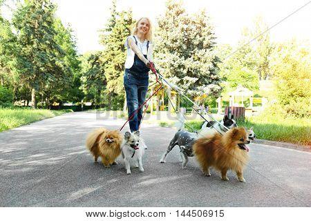 Woman walking dogs in park