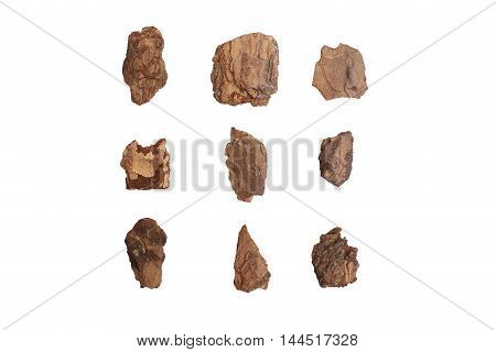 Piece of trunk isolated on white background. Set